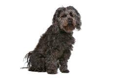Mixed breed dog Royalty Free Stock Image