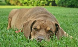 Mixed Breed Dog in Grass Stock Images