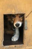 Mixed breed dog head Stock Photo