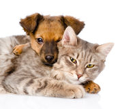 Mixed breed dog hugging cat. isolated on white background Stock Photos