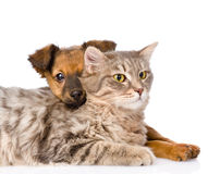 Mixed breed dog hugging cat. isolated on white background Stock Photo