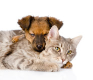 Mixed breed dog hugging cat. isolated on white background Stock Photography