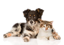 Mixed breed dog and hugging cute cat.  on white backgrou Stock Photo