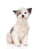 Mixed breed dog looking at camera. isolated on white background Royalty Free Stock Photography