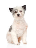 Mixed breed dog looking at camera. isolated on white background Stock Images