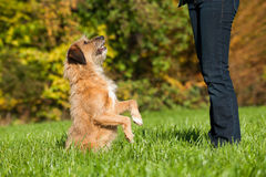 Mixed breed dog. In nature Royalty Free Stock Images