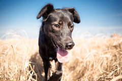 Mixed breed dog  outdoor portrait Royalty Free Stock Photography