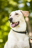Mixed breed dog outdoor portrait Stock Image