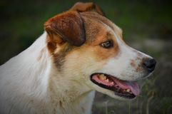 Mixed breed dog outdoors Stock Photos