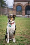 Handsome mutt standing in the park royalty free stock photos