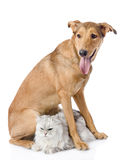 Mixed breed dog and persian cat together.  Royalty Free Stock Photo