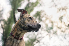 Mixed breed dog, portrait close Stock Photography