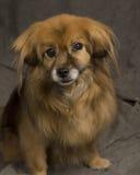 Mixed breed dog portrait Stock Photo
