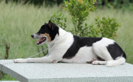 Mixed breed dog. Stock Photo