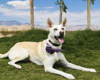 Mixed breed dog posing at the park for her portrait Stock Images