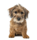 Mixed-breed dog puppy, 3 months old, sitting Royalty Free Stock Image