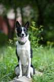 Mixed breed dog putdoor portrait Royalty Free Stock Image