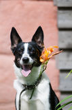 Mixed breed dog putdoor portrait Royalty Free Stock Photo