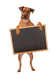 Mixed Breed Dog Standing With Chalk Board Royalty Free Stock Photos