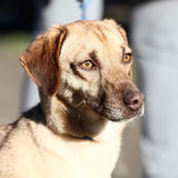 Mixed breed dog. On the sun Stock Images
