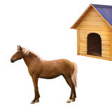 Mixed breed horse standing, old wooden dog house Stock Image