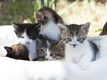 Mixed Breed Kittens stock image