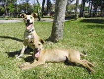 Mixed breed puppies Stock Photos