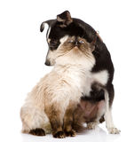 Mixed breed puppy and cat together.  on white back Stock Images