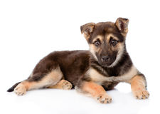 Mixed breed puppy dog looking at camera. isolated on white Stock Photos