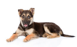 Mixed breed puppy dog looking at camera. isolated on white Royalty Free Stock Photo