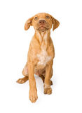 Mixed Breed Puppy Looking Up Stock Images