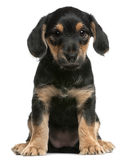 Mixed breed puppy sitting stock photos
