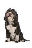 Mixed breed small fluffy dog Royalty Free Stock Photo