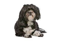 Mixed breed small fluffy dog Stock Photo