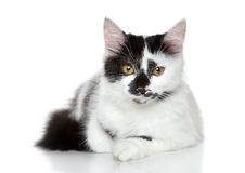 Mixed-breed spotted black and white cat. Lying on white background Stock Images