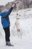 Mixed breed white dog doing high jump trying to catch up the rope in master`s hand Stock Image