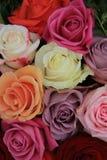 Mixed bridal roses Stock Photos