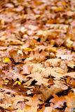 Mixed brown yellow leaves fallen from trees in Autumn seaso Royalty Free Stock Images