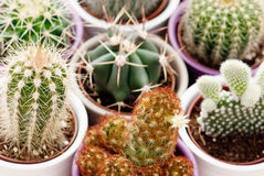 Mixed cacti Stock Photography
