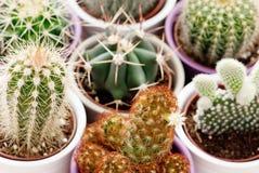 Mixed cacti Stock Photography