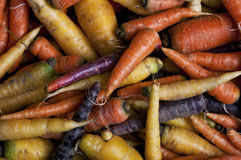 Mixed carrots overview Royalty Free Stock Photo