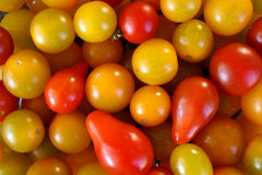 Mixed cherry tomatoes. A colorful selection of cherry tomatoes Stock Image