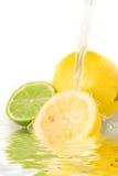 Mixed citrus Royalty Free Stock Photo