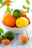 Mixed citrus fruit Stock Photos