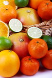 Mixed citrus Royalty Free Stock Image