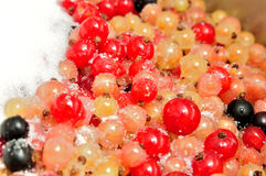 Mixed color currants sprinkled with sugar. Royalty Free Stock Photography