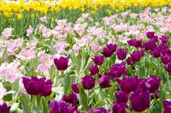 Mixed Color Flower Field Stock Image