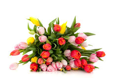 Mixed colorful bouquet tulips Stock Photography