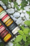 Mixed colorful french macaroons on box put on nature, white stone and green leaves. stock photo