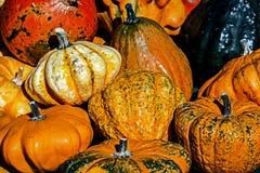 Mixed colorful pumpkins 3 Royalty Free Stock Photos